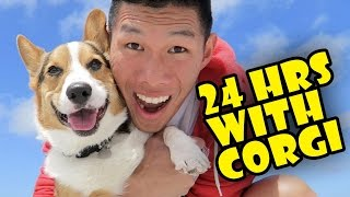 MY CORGI QUALITY TIME -- SPENDING 24 HRS TOGETHER - Life After College: Ep. 498