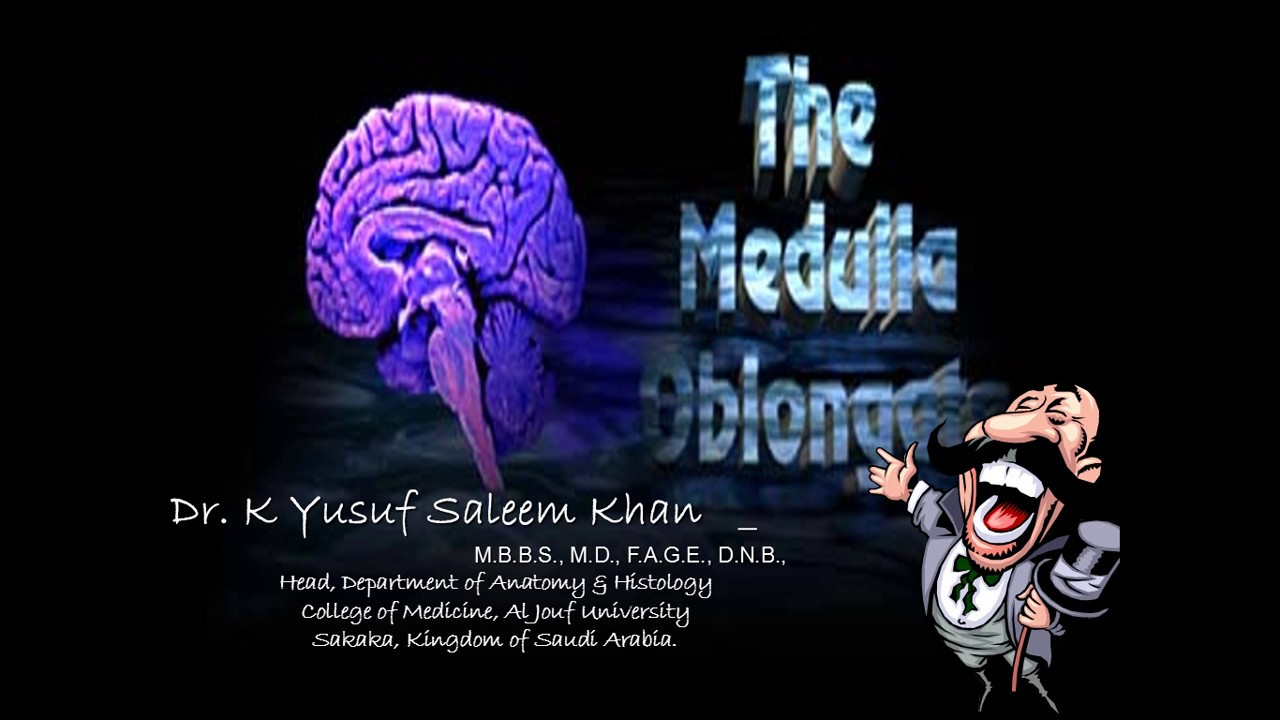 Anatomy Lecture On Brain Stem 2 Medulla Oblongata Youtube