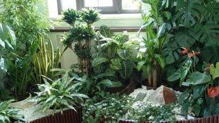 Какие комнатные растения подойдут для ТЕМНЫХ ПОМЕЩЕНИЙ
