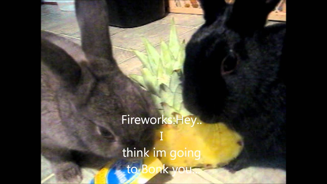 Bunnies and Pineapples