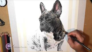 Realistic Colored Pencil Drawing Of A French Bulldog