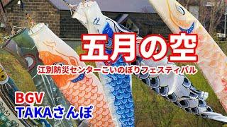 「五月の空」鯉のぼりフェスティバル、江別防災センターにやって来た(4月24日撮影)今ではこういう場所でしか大きなものは見なくなりましたね