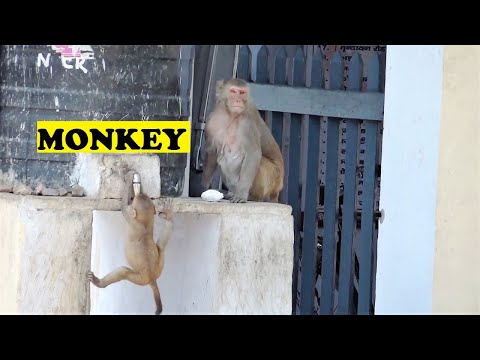 How To Drink Water Baby Monkey Style