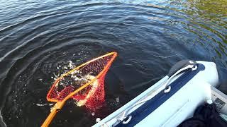 Осенняя рыбалка Окунь и Щука на Джиг