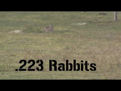 Suppressed .223 Rabbit Hunting