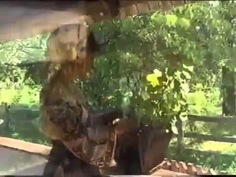 Mariana Ionescu Capitanescu - Azi e ziua mamei mele Video Original
