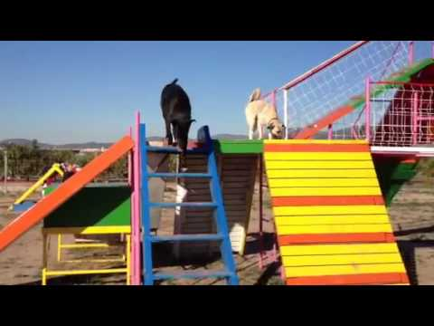 Vania enjoys the agility park
