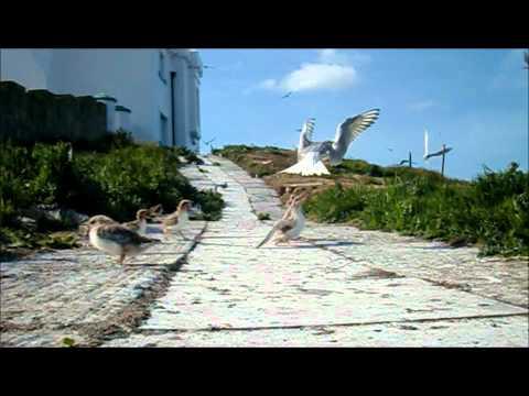 Roseate tern terrace and comic path
