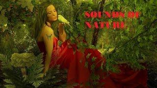 Звуки природы. Пение птиц. Журчание воды. Шум леса. Релаксация.Медитация.Сон.