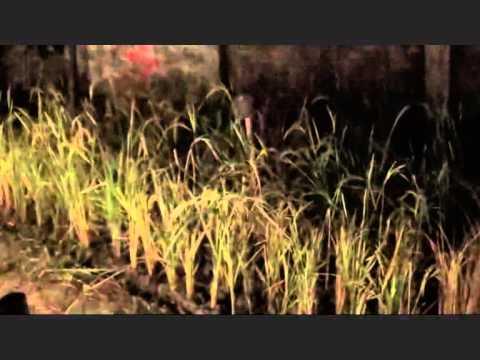 Watching Banchharamer Bagan, One Of The Pandal Of Kalimata | Dipavali - HD