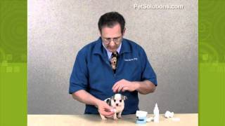 PetSolutions: How to Clean Your Dog's Ears