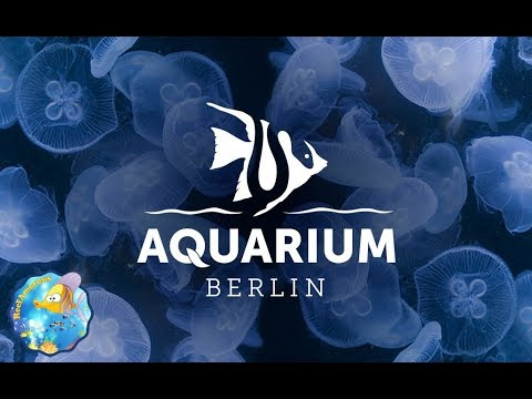 WORLD'S BEST REEF AQUARIUM - Berlin Aquarium