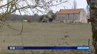 bovins maltraités à Bruère-Allichamps