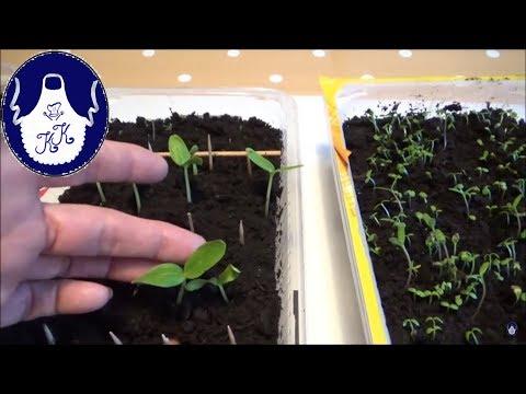 Super Methode !!! Samen mit kochenden Wasser aussäen!!!