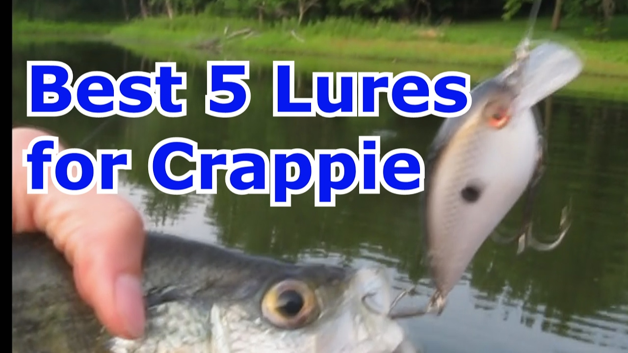Crappie fish bait images galleries for Best crappie fishing times