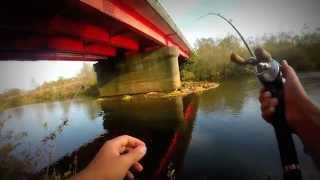勇払川 鯉 ヒット前から収録