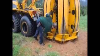Large pine tree Transplanting By Machine Digging