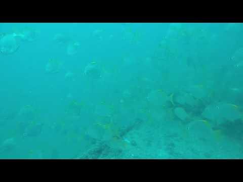 Wreck diving Abu Dhabi