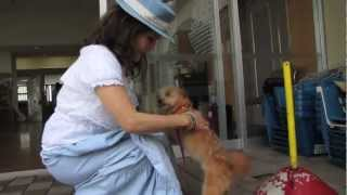 Japan Earthquake LOST PETS relief with First Lady DEWI SUKARNO (Pt.3)