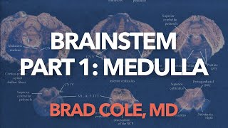 Brain Stem, part 1, Medulla
