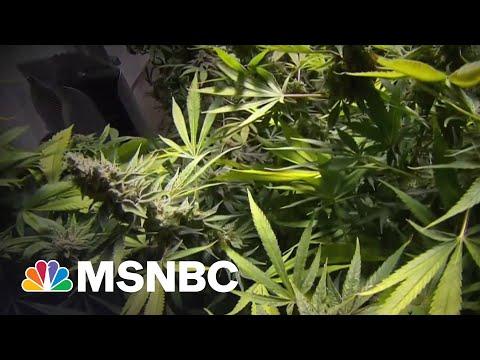 Download Senate Dems Propose Bill To Federally Decriminalize Marijuana