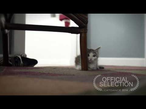 Catdance Finalist 2014: Ricky