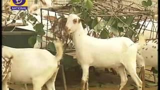 कृषि दर्शन | Krishi Darshan - डी.डी.नेशनल | DD National (15-12- 2016) (सुबह 6:30 बजे)