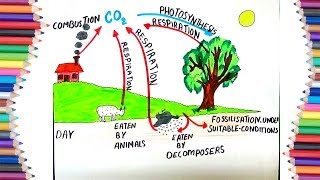 """HOW TO DRAW """"CARBON CYCLE"""" DURING  THE DAY  FOR KIDS"""