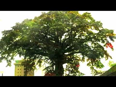 The Cotton Tree Song (From The Album: The World As One by Frankie Jahloh)