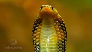 বিশ্বের সবথেকে ভয়ংকর ১০টি বিষাক্ত সাপ | Top 10 Most Dangerous Snake in the World | Poisonous Snakes