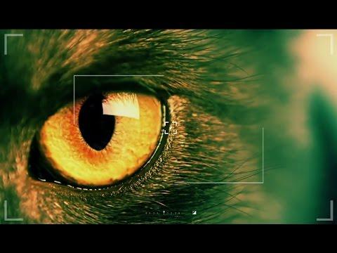 Эти непростые животные. Фильм 3 | ЕХперименты с Антоном Войцеховским