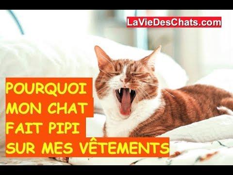 Mon Chat Fait Pipi Sur Mon Pull 🐱Méthode 2/4