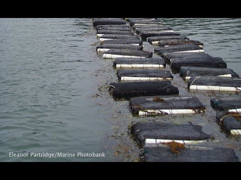 Aquaculture Development And Environmental Sustainability- Trond Bjorndal