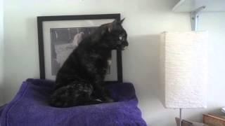 Cats Watching Bird Feeder