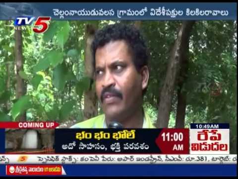 Sentiment Of Siberian Birds In Vizianagaram : TV5 News