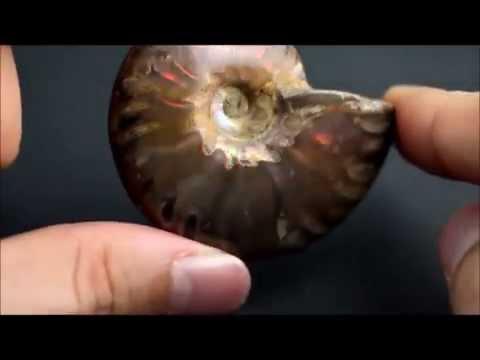 ファイヤーアンモナイト 化石 42g / Ammonoidea
