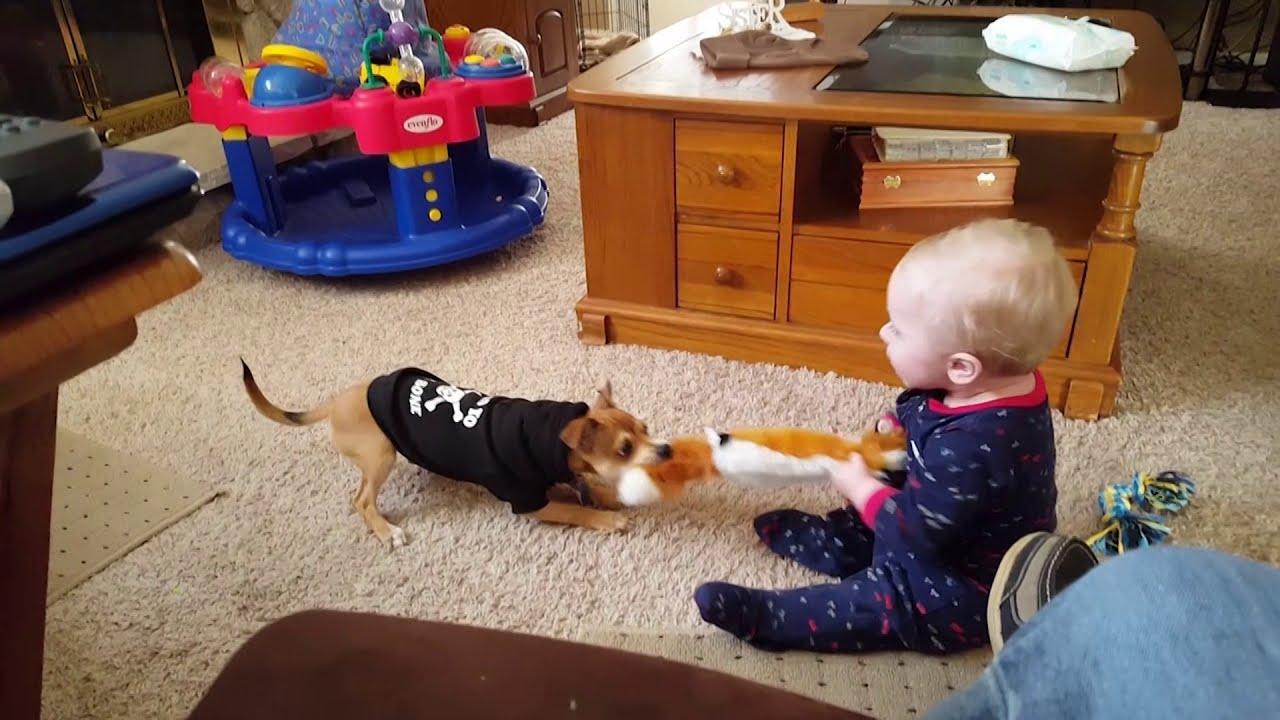 فيديو من الطفل والكلب ★ تجميع الفيديو مضحك