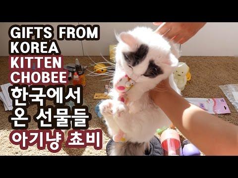 한국에서 온 선물들 - 아기 고양이 쵸비 GIFTS FROM KOREA - KITTEN