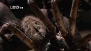 Самые опасные животные Амазонии. National Geographic