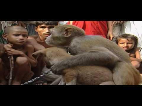 Monkey Love In Bangladesh | Animal Anthology Episode 19