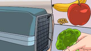 How to Safely Transport Your Guinea Pigs in the Car
