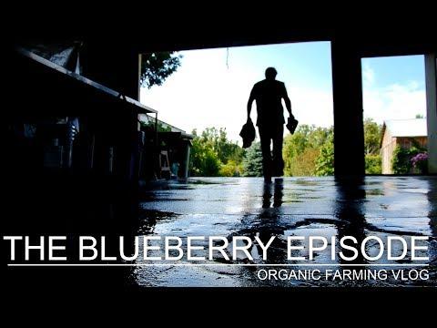 THE BLUEBERRY EPISODE - ORGANIC FARMING VLOG (SE01 EP15)