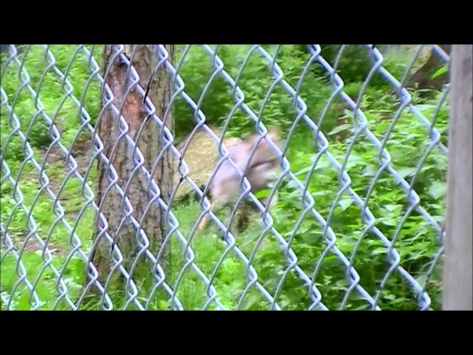 Djuren På Lycksele Djurpark Youtube
