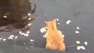 Лучшие приколы  Коты на рыбалке