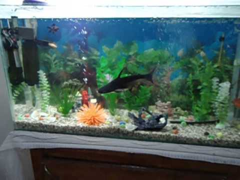 Mon requin d 39 aquarium shark fish avi youtube for Aquarium 30l combien de poisson rouge