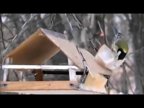 Зимующие птицы Киева