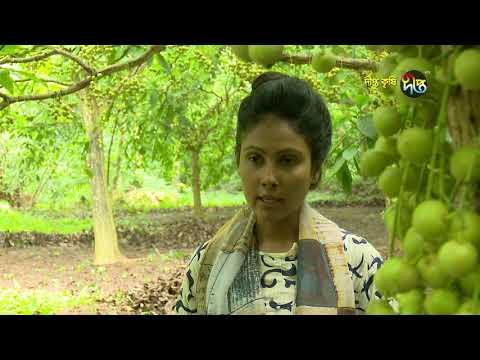 Deepto Krishi/দীপ্ত কৃষি -লটকন চাষ(ফলো আপ)/নরসিংদী, পর্ব ২৭০