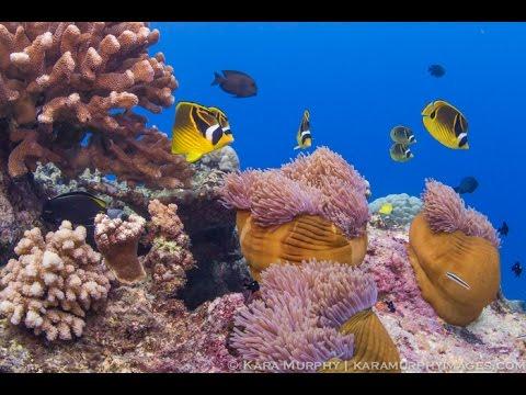 Christmas Island underwater