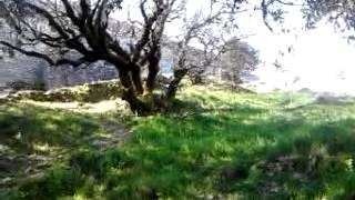 Monte Gonare Orani ( Nu)  la sua magia-sentiero per la Chiesa di Nostra Signora di Gonari