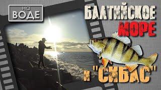 Морской окунь. Я его поймал! Рыбалка на Балтийском море в Польше.